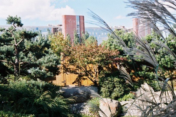 Jardin japonais for Conception jardin chinois